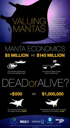"A Lesson in ""Mantanomics"" http://blog.conservation.org/2014/02/indonesia-gives-mantas-a-new-ray-of-hope/"