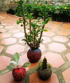 Anticipa tu pedido #halloween #2017  #kokedama #orange #blue #green #nature #landscaping #forest #vegetables #succulents #cactus #bonsai #gift #special #live #art #fashion #design #lifestyle #recycling #event #instagram #instagood #instamoment #sustentable #venezuela #southamerica #world #50kokes