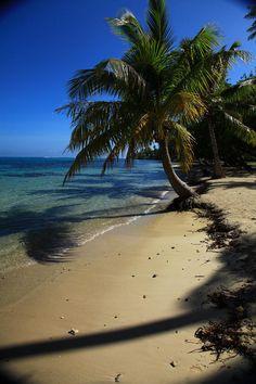 ✮ Moorea Beach Palm - Tahiti