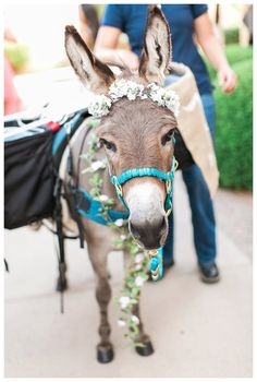 Rachel Solomon Photography Blog | Madison and Justin – Scottsdale Plaza Resort Wedding | http://blog.rachel-solomon.com. Burrito the Burro was a huge hit at the wedding. He served beer to our guests just before the ceremony.