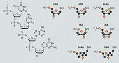 Science fiction meets real world research.  Article on XNA, molecules similar to DNA and RNA.