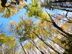 Forest canopy, Great Smoky Mountains National Park:  http://www.nps.gov/grsm/index.htm