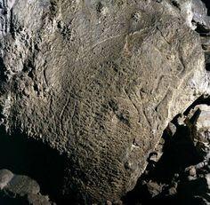bisonte - cueva de Coimbre - asturias