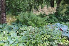 Kolorowy ogród na piasku - strona 584 - Forum ogrodnicze - Ogrodowisko Gourd Art, Gourds, Organic Gardening, Worlds Largest, Harvest, Flowers, Plants, Craft Ideas, Fun