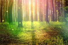 Fairy Forest Background Creator s Corner / Art Resources Episode Forums Scenery background Forest background Pretty landscapes