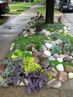 Gorgeous rock garden!