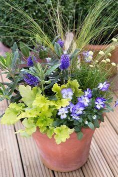 Pot of the month: September. Contains Stipa tenuissima, Santolina chamaecyparissus, purple hebe (H. addenda hybrid), Heuchera 'Lime Marmalade' and purple & white viola. Photo by Sarah Cuttle. For another autumnal pot, try http://www.gardenersworld.com/plants/pots-containers/autumn-winter/autumn-pot-display/1137.html