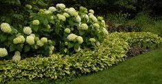 Hydrangeas and hostas love this combo but I would try for a color ...