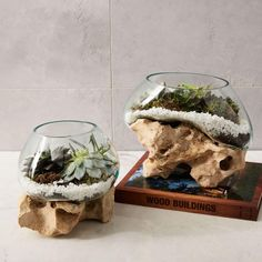 The bases of these terrariums are limestone sourced from volcano eruptions in Indonesia. After the rocks are selected, cleaned and given a top coat, blown glass is moulded onto the stone, creating a unique vessel to display your favourite greenery.