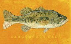 Largemouth Bass, Wildlife fresh water fish art by John W. Golden.