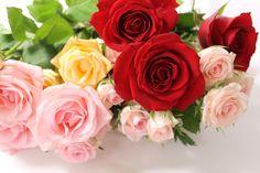 薔薇の花束No.5561の無料写真