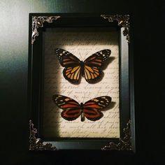 Real Monarch Butterfly & Tropical Milkweed by beyondthedarkveil