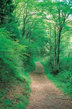 #2 favorite exercise... Trail Running. I like the Kennesaw Mtn trails and love Heritage Park, here in Marietta, GA!!