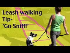 This exercise is great for dogs who are constantly crossing in front of their owners on walks to try to reach something to sniff.    This video is also good for owners who have dogs who blow them off when they leave the house.  By controlling access to real life rewards you can build your importance to your dog when outside of the house.    Walk...