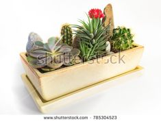 Potted plants in a pot. Plant composition. Stock photography, images, pictures, Illustrations, ideas. Download vector illustrations and photos on Shutterstock, Istockphoto, Fotolia, Adobe, Dreamstime