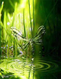Secret Life of Dragonflies....