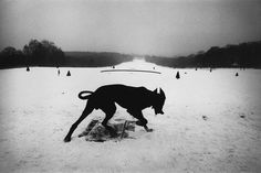 Josef Koudelka / Magnum Photos To me,?is one of the most brilliant photographers out there and a true master of black and white. Magnum Photos, Black And White Dog, White Dogs, Black Dogs, White White, Fred Herzog, Co Berlin, Herbert List, Karl Blossfeldt