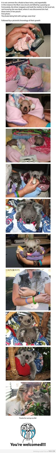 why i am going to nursing school.... well not to nurse koalas... but babies