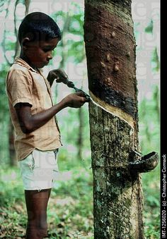 A Sri Lankan child working at a rubber plantation