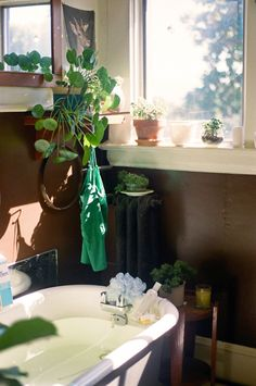 pilea peperomioides in bathroom
