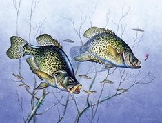 Crappie Brush Pile Painting by JQ Licensing