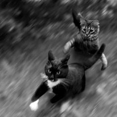 Cat chases cat