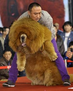 5 Biggest dogs you have ever seen | Pic#01