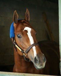 Stellar Wind Blows Into Oaklawn Park for Apple Blossom