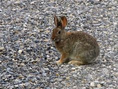 We have the cutest bunnies at our cabin in Mackay, Idaho.