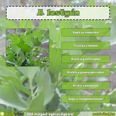 Healthy Food, Healthy Recipes, Herbs, Healthy Foods, Healthy Eating Recipes, Herb, Healthy Eating, Health Foods, Healthy Food Recipes
