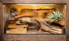 Substrate selection for leopard gecko is vital for its health and happiness. A correct choice of substrate can make your leopard gecko live happily in the Leopard Gecko Setup, Leopard Gecko Cage, Leopard Gecko Habitat, Lepord Gecko, Terrariums Gecko, Lizard Terrarium, Bearded Dragon Terrarium, Gecko Vivarium, Reptiles