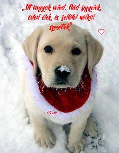 Labrador Retriever, Cute, Animals, Iphone, Animal Pictures, Good Night, Labrador Retrievers, Animales, Animaux