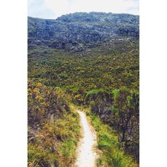 Trail leading up to the waterfall - Fernkloof nature reserve