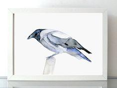 Jackdaw Watercolor