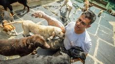 The man who looks after 735 dogs http://www.bbc.com/news/world-asia-india-38303320 #dogs
