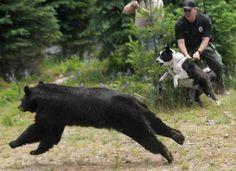 H παρέα του Επταπυργίου : Σκύλοι Καρελίας: Από την Καλιφόρνια στη Βόρεια Πίν...