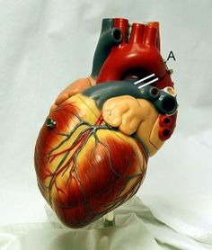 Facts About Heart Disease