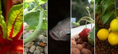 Aquaponics Systems, Supplies and Education