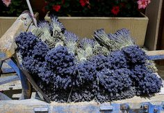 Bunches of dried lavender on sale in Sault, the lavender production center of Provence