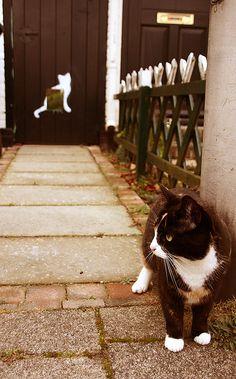 cat door, Holland