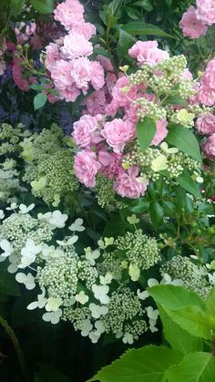 roses and white lace cap hydrangea - what a pretty combination