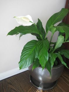 green house plants identification get to know my plants at home pinterest plant identification house and green