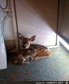 -Datei 'Interessante Tierfotos.'- Eine von 875 Dateien in der Kategorie 'Tiere' auf FUNPOT. Kommentar: Interessante Tierfotos