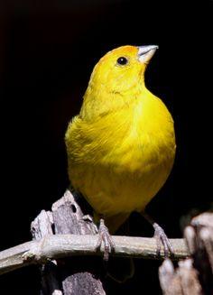 360 Ideas De Canarios Canarios Aves Pajaros