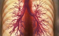 Práctico pulmón artificial puede liberar a personas que dependen de asistencia respiratoria