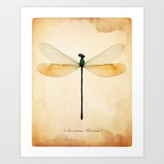 DRAGONFLY Art Print by THEPALMER - $12.48