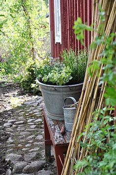 potted vegetable / herb plants