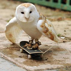 skateboarding owl, cute :)