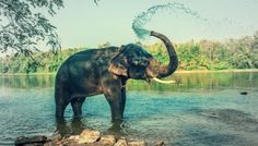 The Most Famous Zoo Animals You Need To See
