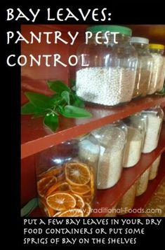 Pantry pest control
